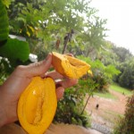 Egg Fruit