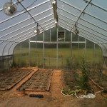 greenhouse_rawnora