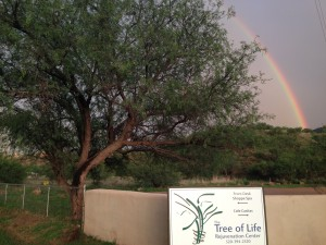 Sunset_rainbow_TreeOfLife